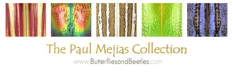 Butterflies & Beetles